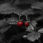 IMG_7960-Edit
