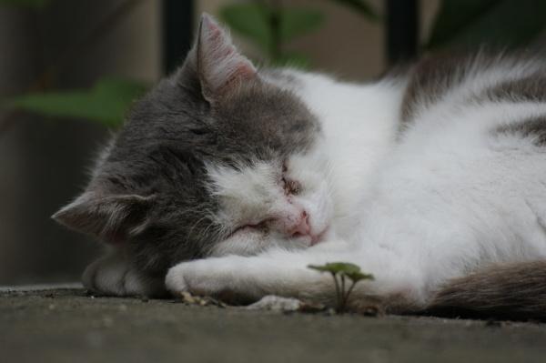 Pauza (hodnotitel zařadil mezi průměrné a politoval kočku za nemocné oči)